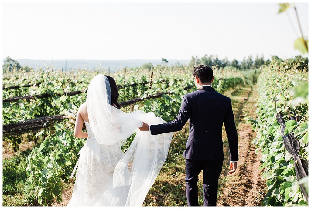 Groom holds bride's veil as they walk down winery| Adamo Estate Winery wedding| outdoor wedding| winery wedding| bride and groom portraits| Toronto photographer 3photography